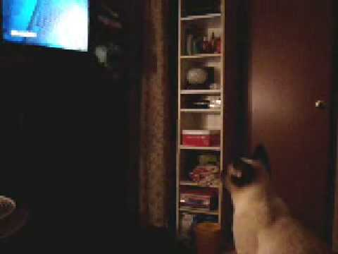 FUNNY!! Cat watches TV – (Charmed)