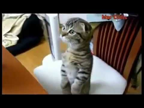 Cutest Cat You've Ever Seen -So Cute and Funny Cat