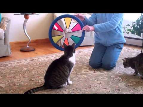 top 15 funny cat tricks part 2