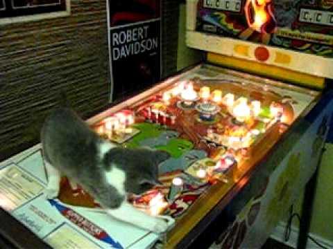 funny cat on pinball
