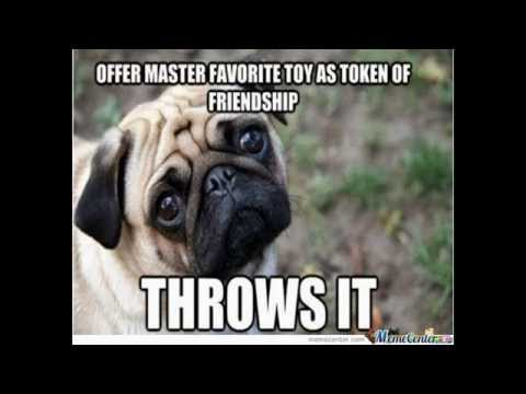 Funny Cute Dog Memes #4 – Pug Memes – Pugs Galore!