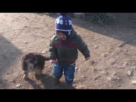 Doggy dog is not good ! funny babies & pets.