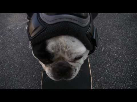 Funny Dog Nash Skateboarding / Uncut