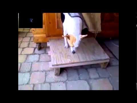 Angry Dog Sound So funny