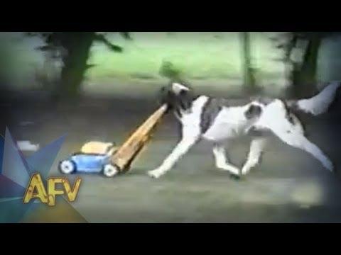 Funny Dog Landscaper! | Funny Dogs | AFV