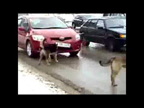 Funny dogs youtube videos. Funny dog youtube videos