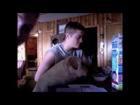 Funny Dog Eating Cereal LOL