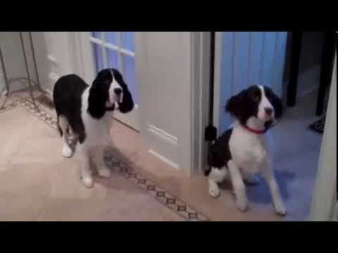 Dogs Very Excited At Feeding Time – Funny Animals