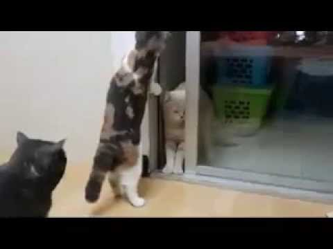 cat meow meow cat cat noob!!