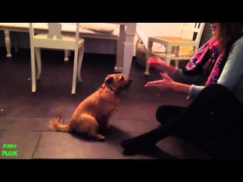 Funny dogs playing dead after finger shot  2014 HD