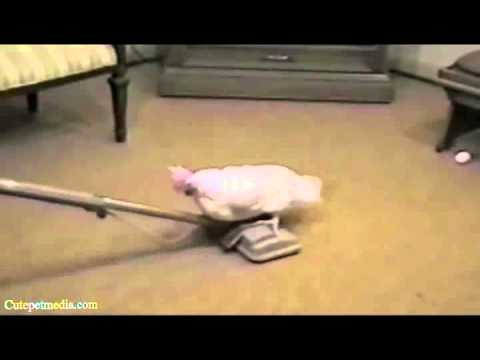 BEST FUNNY ANIMALS 2014 clip2