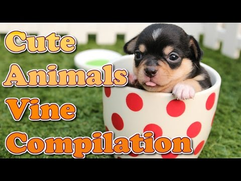 Cute and Funny Animals Vine Compilation March 2015