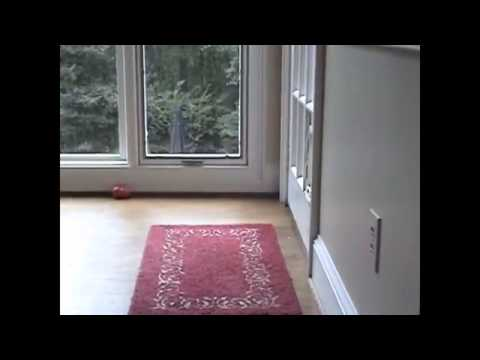 Doggie door faceplant Funny Pranks and Funny Animals Clips 2014