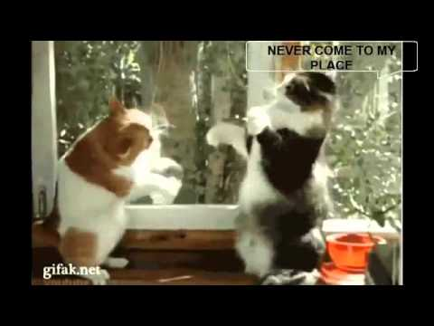 Funny Animals Compilation 2014 – may update