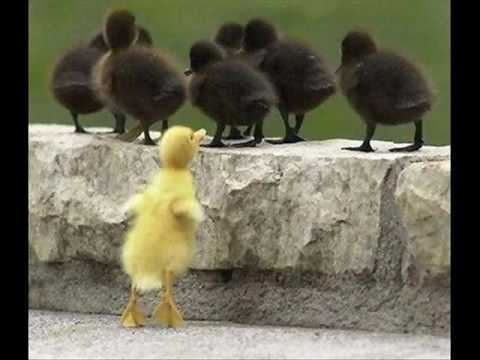 funny and cute animals!!!!