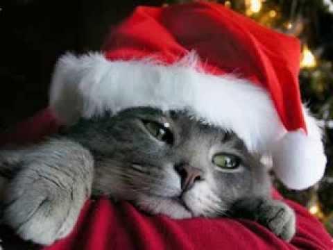 Funny Christmas Animals, Funny Christmas Photos, Funny Christmas