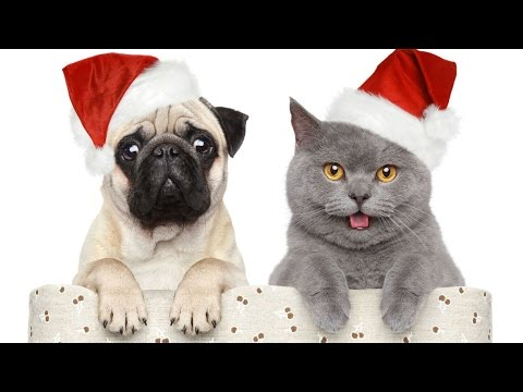 Xmas Cards – Merry Christmas and Happy New Year – funny animals