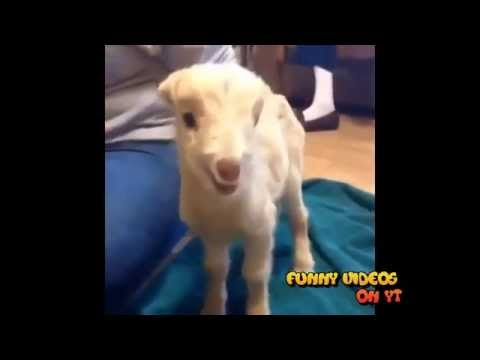 Funny Vines Compilation / Talented Animals / Funny Animals #1