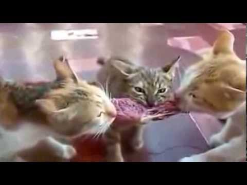 ★ Best Funny Animal Videos Ever!! Funny Cat Videos Compilation 2014 ★