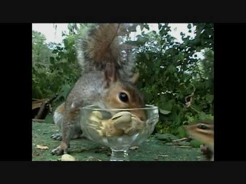 Funny Talking Animals Eric the Squirrel Episode 20 Pistachio.wmv
