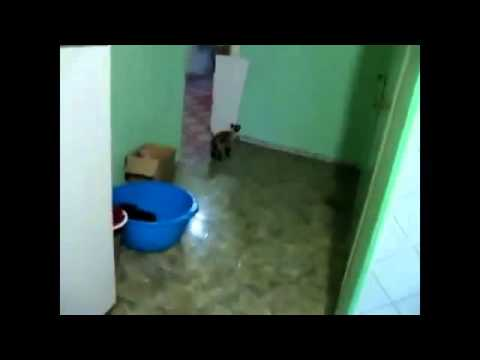 Funny Cat Compilation Cat climbs vertical wall h263 new 2014