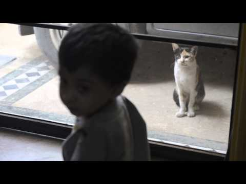 Funny —  Baby & Cat Interesting Conversation