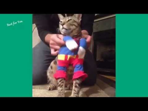 funny cats Vines Compilation 2014 720p