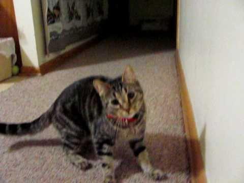 my funny cat 2