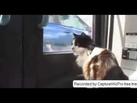 funny cat on bus