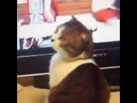 Funny Cat i Kill You