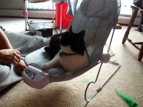 FUNNY TOHER CAT BABY BOUNCER