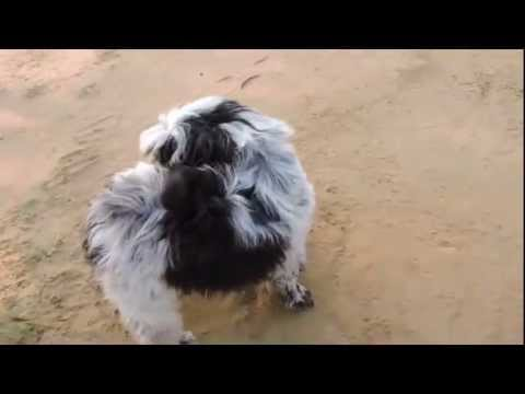 Funny Animals 2015,2016 Video compilation, Top Funny Dog,Cat Video