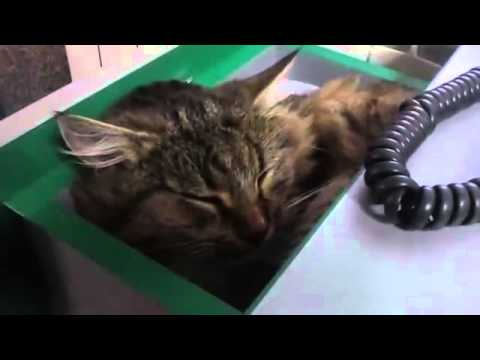 Animals Funny Video – Office Desk Cat