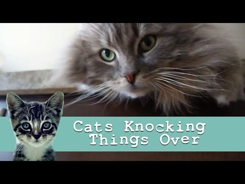 """Cats Knocking Things Over"" : Funny Cat Video"