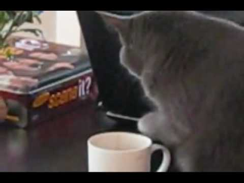 Funny – Cat Coffee Thief – watch until the end!!!