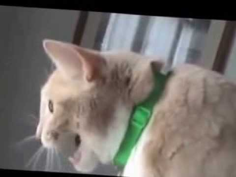 Talking Cats Funny Video Compilation