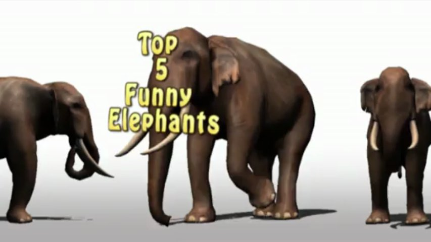 Funny Animals : Best of ELEPHANTS
