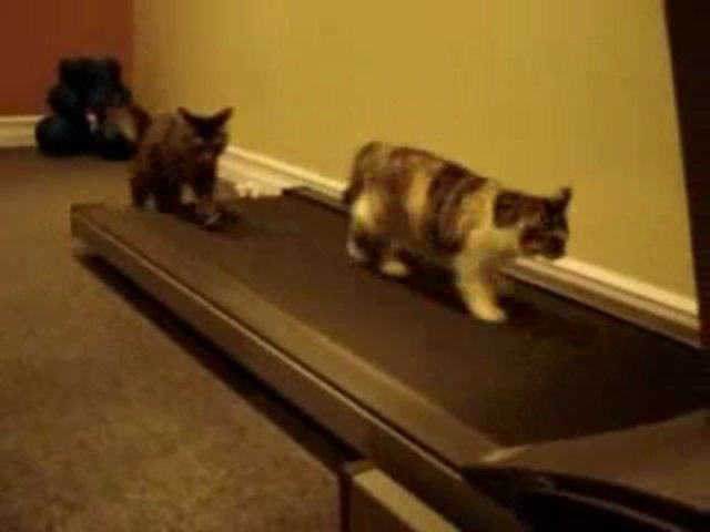 Cats on Treadmill – Funny Videos
