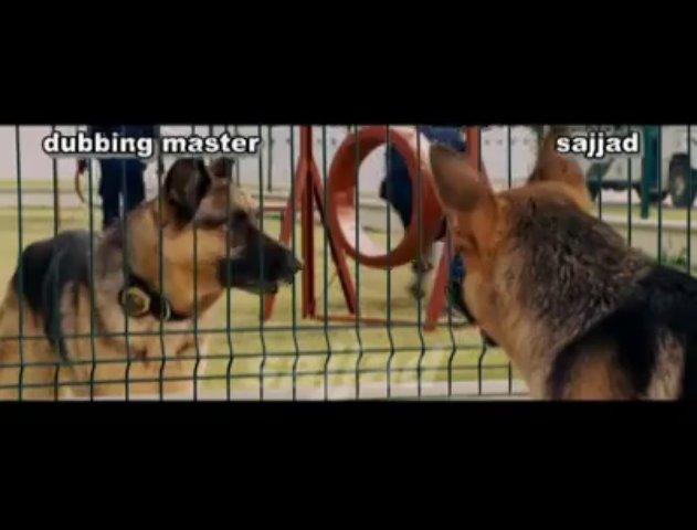Funny Dogs Taking In Punjabi Tota