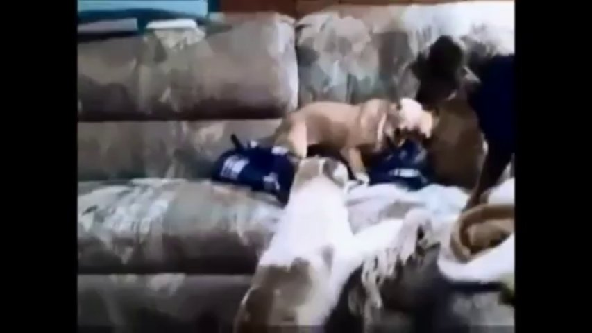 Cats vs Dogs Funny