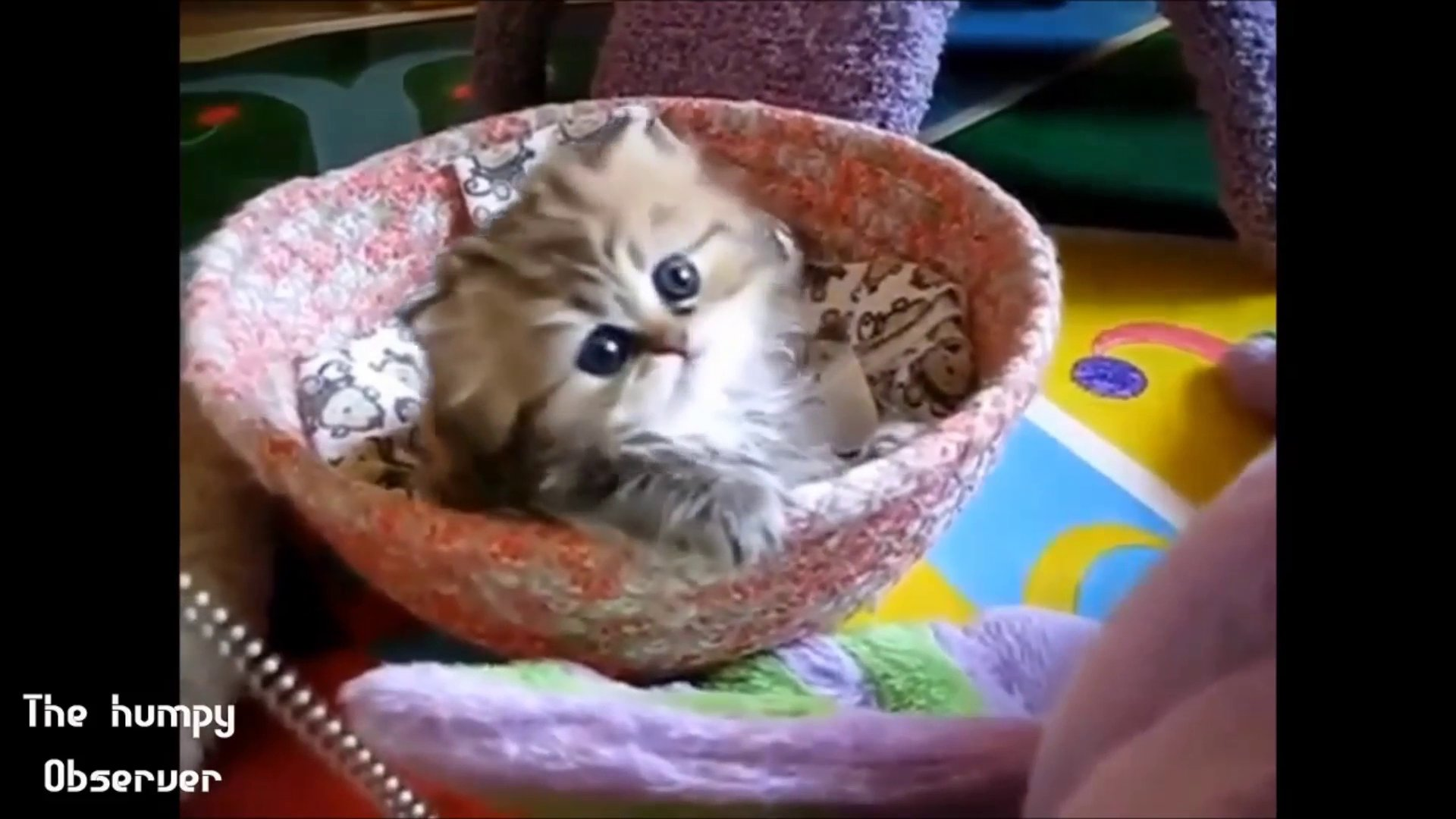 Most funny animals ever – Cutest funny animals 2014