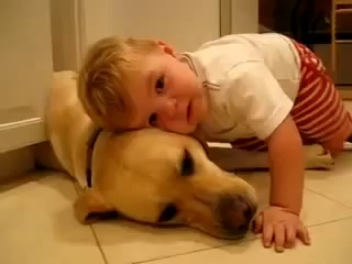 Funny videos of babies – funny pranks – funny animals