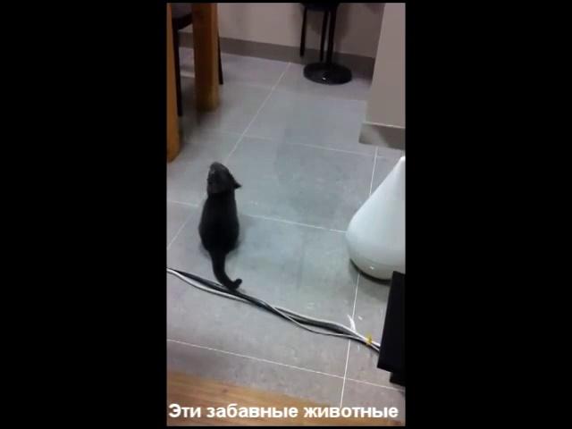 Смешные кошки ловят пар Funny cat catch couples