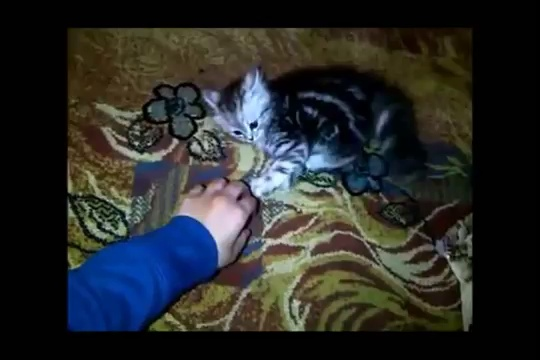 Funny Cats Compilation – Funny Cat Videos Ever- Funny Videos – Funny Animals – Funny Animal Videos 9