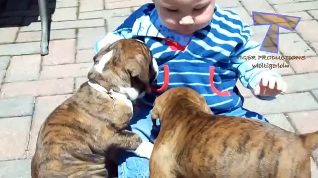 Cute babies and dogs playing together – Funny baby & dog compilation
