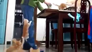 Funny Cats Compilation – Funny Cat Videos Ever- Funny Videos – Funny Animals – Funny Animal Videos 4 – Video Dailymotion