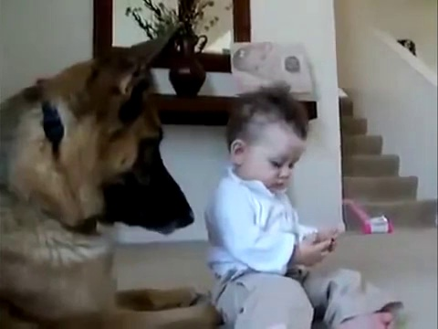 Best Funny Dogs And Children Funny Videos with your kids