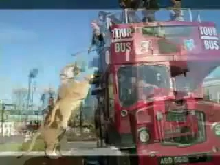 Funny videos, animals, funny animals, lion, funny lions, amazing videos – Video Dailymotion