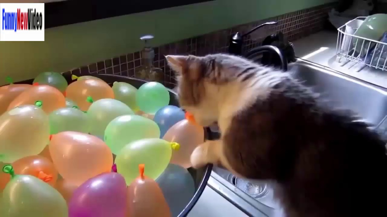 Funny Cats Videos Funny Animals Compilation 2015