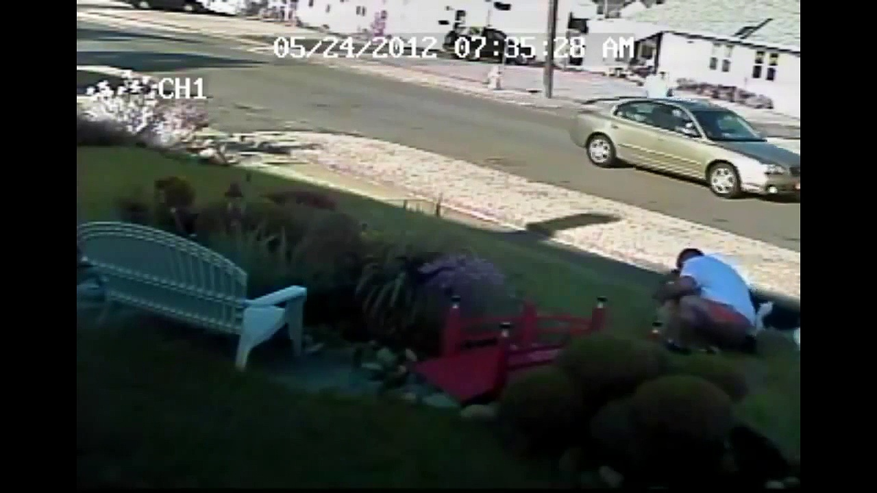 When Crazy Animals Attack Boxer dog attacks rabid deer